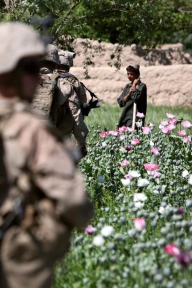 """Tropas patrullando campos de adormidera en Afganistán. El general afgano Khodaidad se quejaba en 2009 que contingentes de la OTAN de EE.UU., Gran Bretaña y Canadá estaban """"gravando"""" la producción de opio en las regiones bajo su control. Por su parte, el ex director general de la Inteligencia Interservicios de Pakistán (ISI), general Hamil Gul, destacaba que aviones militares estadounidenses estaban siendo utilizados para el narcotráfico en Afganistán."""